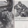 naha opice 4