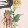 pestovanie liecivych rastlin na malych plochach – antikvariat stary svet 1