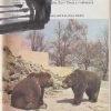zvirata celeho sveta 4 – medvedi a pandy – antikvariat stary svet 1